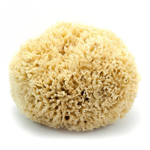 "Caribbean Natural Sea Wool Sponge, 7"" Large - Fendrihan Canada - 1"
