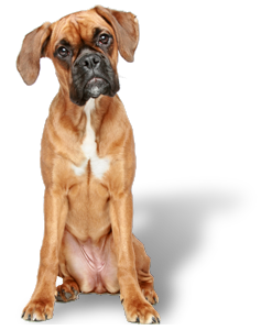 Pet Supplies & Dog Grooming | Stock up on the Best Dog Food & Cat Toys