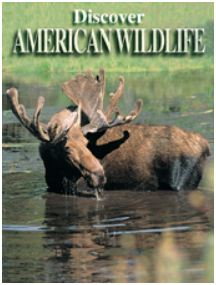 Discover American Wildlife Playing Cards