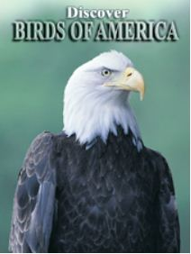 Discover Birds of America Playing Cards