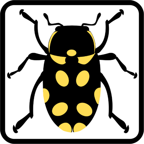 Beetle Stomp - Source Code -