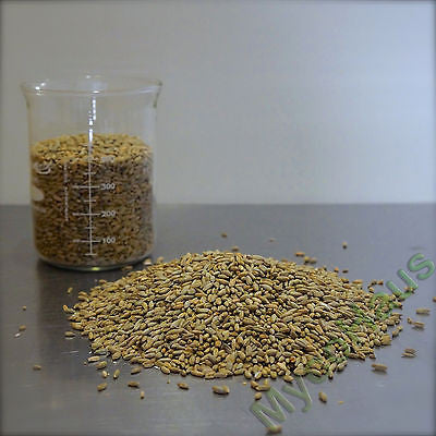 25 Pounds Rye Grain / Rye Berries-RAW