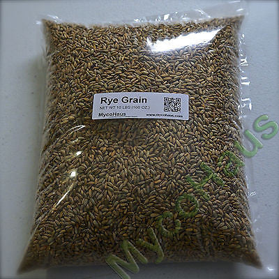 10 Pounds Rye Grain Berries