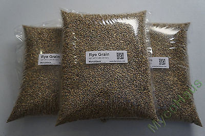 15 Pounds Rye Grain / Rye Berries-RAW