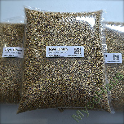 5 Pounds Rye Grain / Rye Berries-Raw