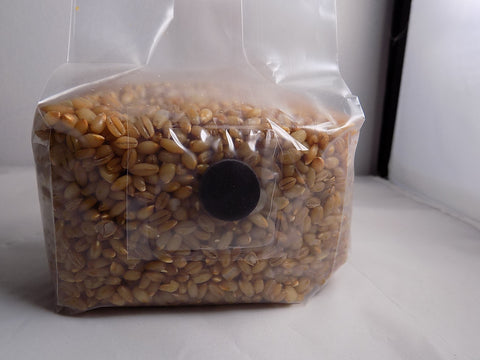 One Pound Sterilized Rye Grain with Injection Port Bag