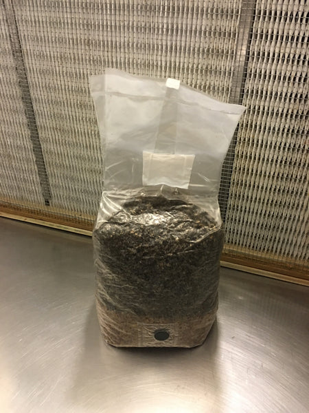 All in One 5 Pound Spawn Bag, Rye & Compost Mushroom Grow Kit