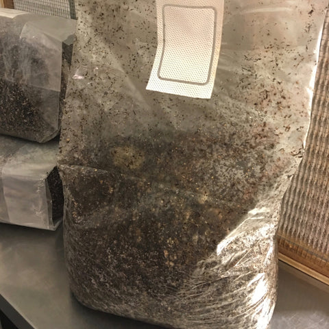 5 Pounds sterilized mushroom compost
