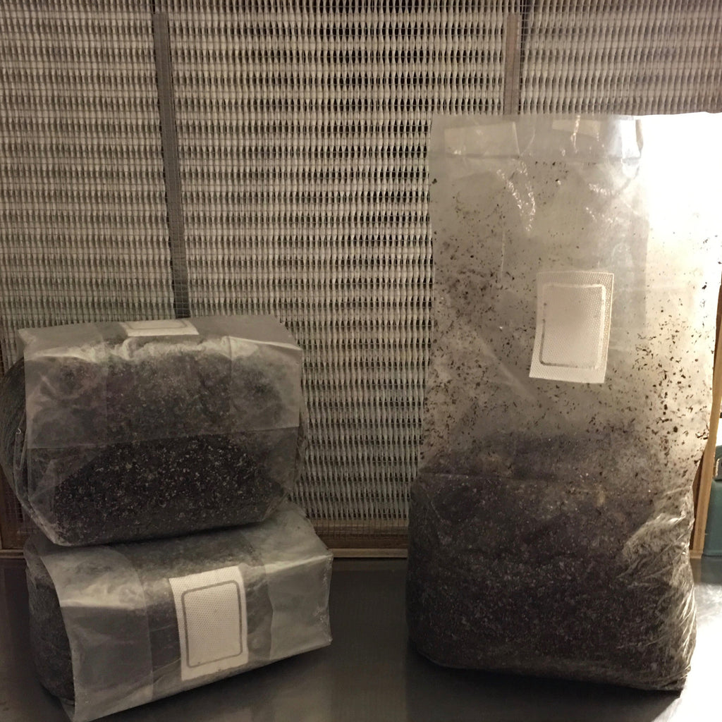 10 Pounds sterilized compost