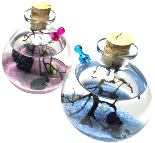 Shrimp Bubble Ecosystem Kit -Duo
