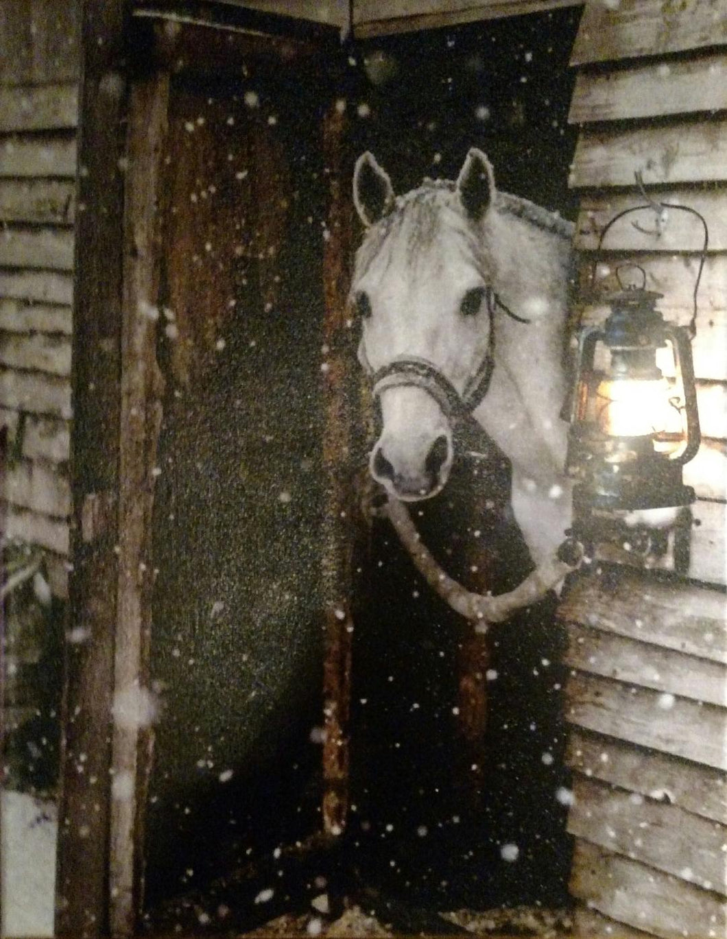 Horse Looking from Barn Canvas