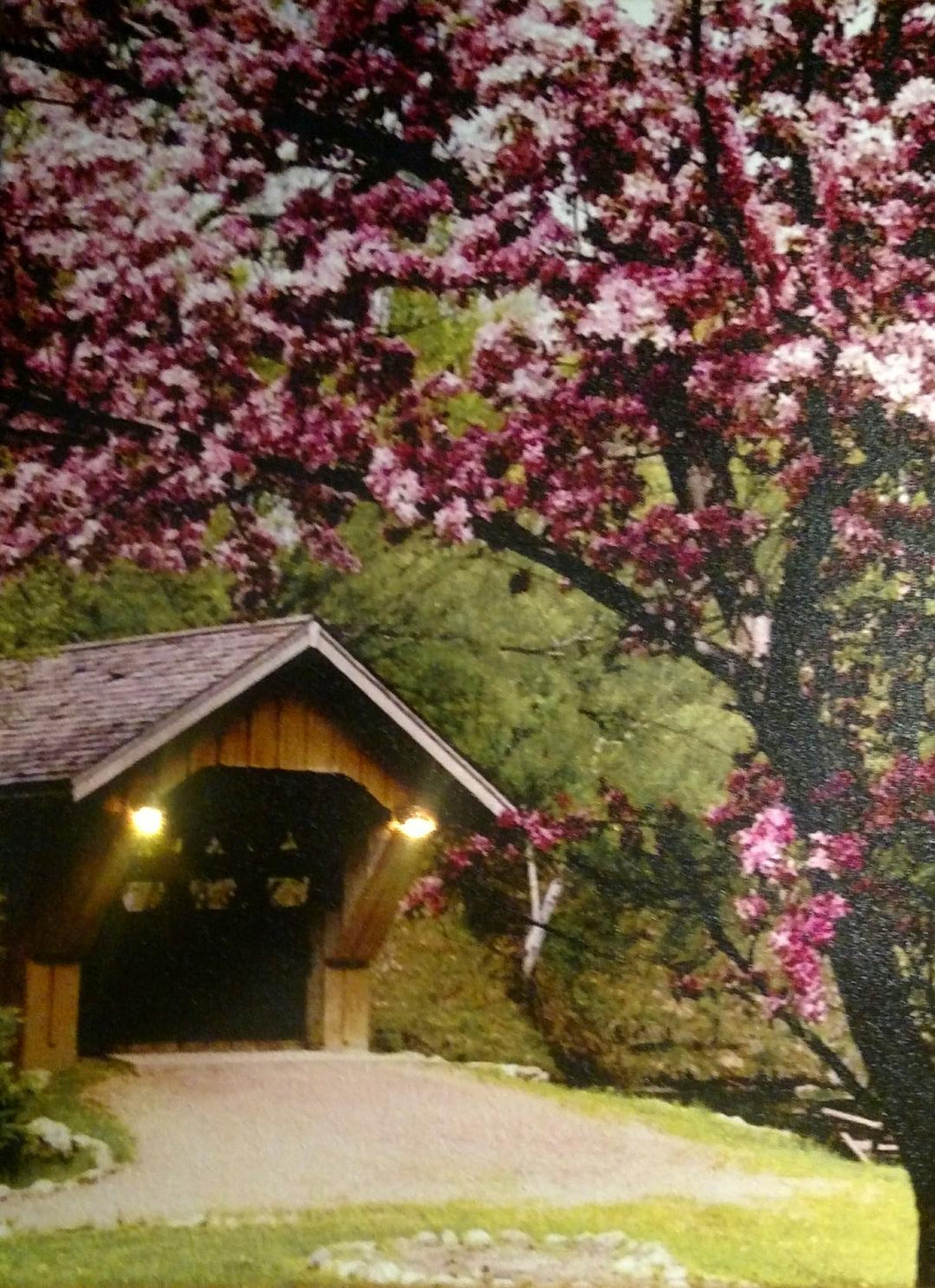 Covered Bridge with Blossom Tree Canvas