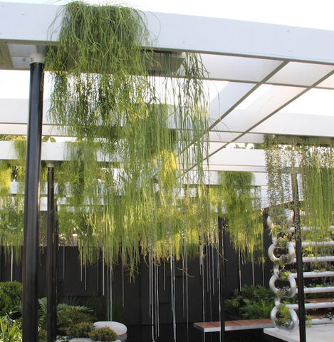 Brendan Moar's award-winning show garden at the Australia Garden Show, Sydney