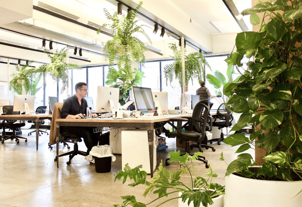 Interior office plants Entryway Create Tranquil Working Environment With Our Indoor Office Plants Evergreen Interiors Inc Indoor Office Plants Sydney Terrace Outdoor Living
