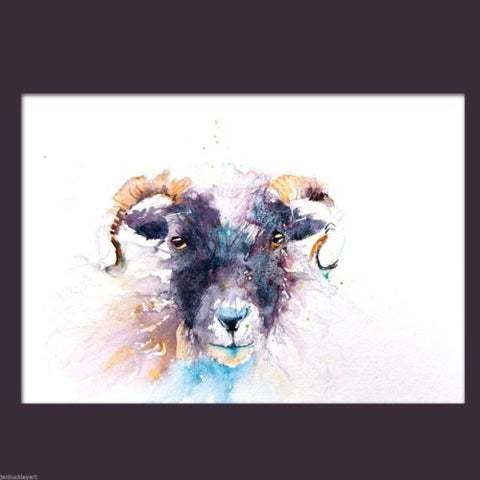 JEN BUCKLEY signed LIMITED EDITON PRINT of my SHEEP watercolour  - Jen Buckley Art limited edition animal art prints