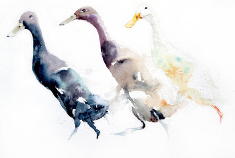 limited edition print  Indian runner DUCKS - Jen Buckley Art limited edition animal art prints