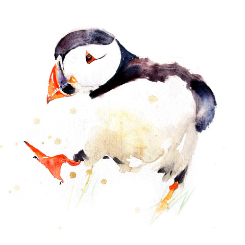 JEN BUCKLEY ART  signed PRINT of my original PUFFIN watercolour