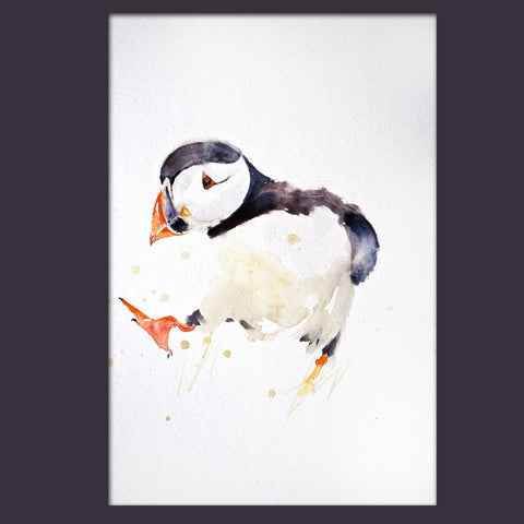 JEN BUCKLEY ART  signed PRINT of my original PUFFIN watercolour - Jen Buckley Art  - 3