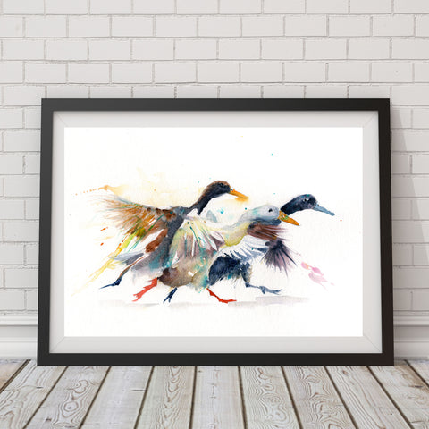 limited edition print  Indian runner DUCKS