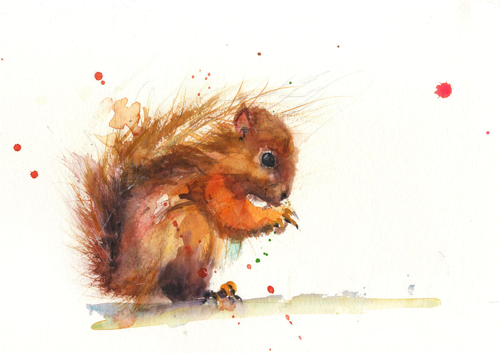 limited edition PRINT of my original RED SQUIRREL watercolour - Jen Buckley Art