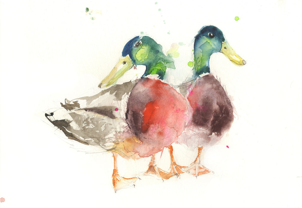 limited edition print  mallard DUCKS - Jen Buckley Art limited edition animal art prints