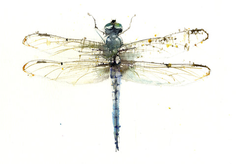 JEN BUCKLEY signed LIMITED EDITON PRINT of my original DRAGONFLY - Jen Buckley Art limited edition animal art prints