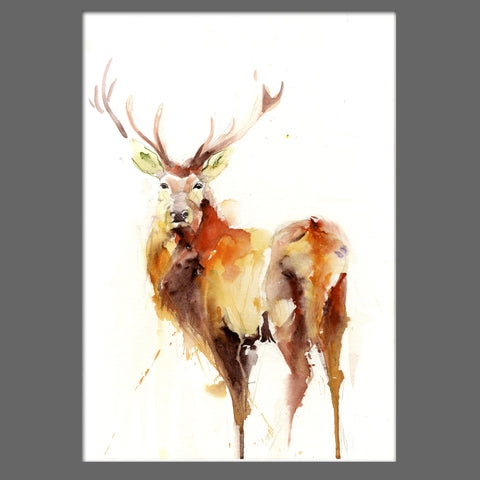 signed LIMITED EDITON PRINT of my original STAG  - Jen Buckley Art limited edition animal art prints