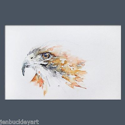 JEN BUCKLEY signed PRINT of my original HAWK watercolour painting - Jen Buckley Art limited edition animal art prints