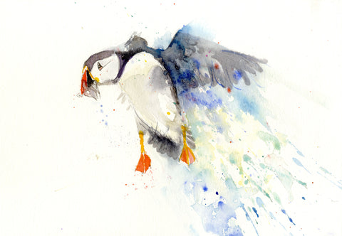 signed LIMITED EDITON PRINT of my original Flying PUFFIN - Jen Buckley Art limited edition animal art prints