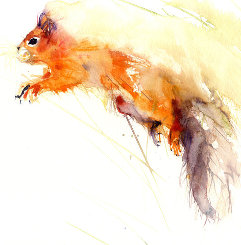 limited edition print - Red Squirrel - Jen Buckley Art limited edition animal art prints