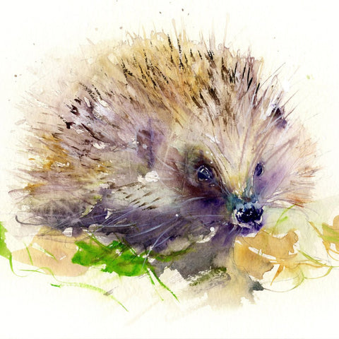 Limited edition print of a hedgehog by Jen Buckley Art