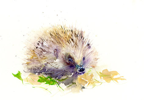 signed limited edition PRINT of my original HEDGEHOG watercolour