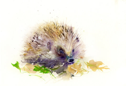 Limited edition print of a hedgehog
