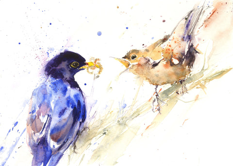 Blackbirds feeding limited edition art print