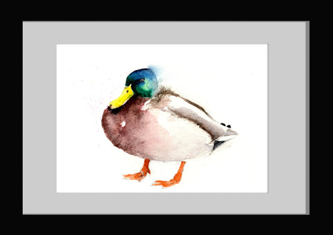 Mallard  duck limited edition print.