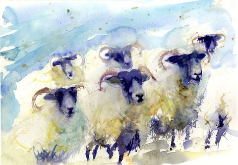 JEN BUCKLEY signed LIMITED EDITON PRINT of my original Swaledale SHEEP - Jen Buckley Art limited edition animal art prints