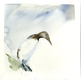 Limited edition print 'Guillemot'
