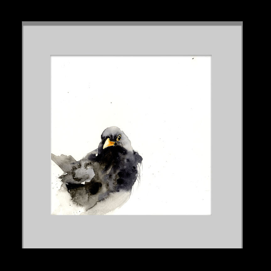 Blackbird limited edition print - Jen Buckley Art limited edition animal art prints
