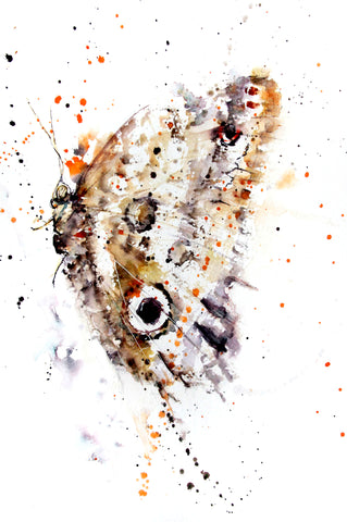 JEN BUCKLEY signed LIMITED EDITON PRINT of original BUTTERFLY watercolour
