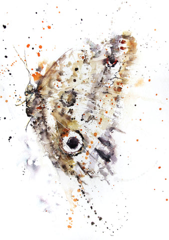 JEN BUCKLEY signed LIMITED EDITON PRINT of original BUTTERFLY watercolour  A3 - Jen Buckley Art limited edition animal art prints