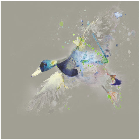 Limited edition print  'flying  duck' - Jen Buckley Art limited edition animal art prints