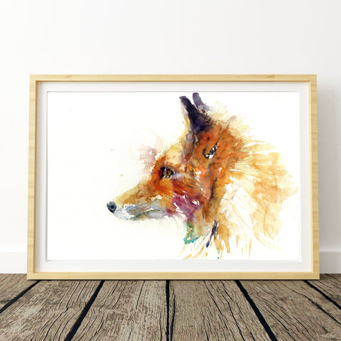 Red fox portrait  limited edition print