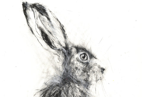Hare charcoal drawing by Jen Buckley
