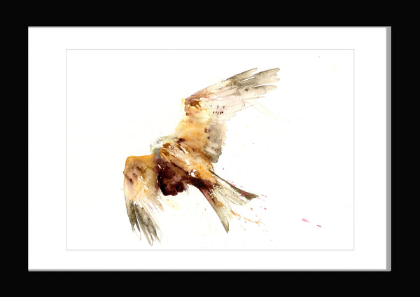 limited edition PRINT of original red kite watercolour