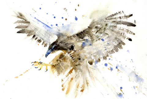 Hawk limited edition art print
