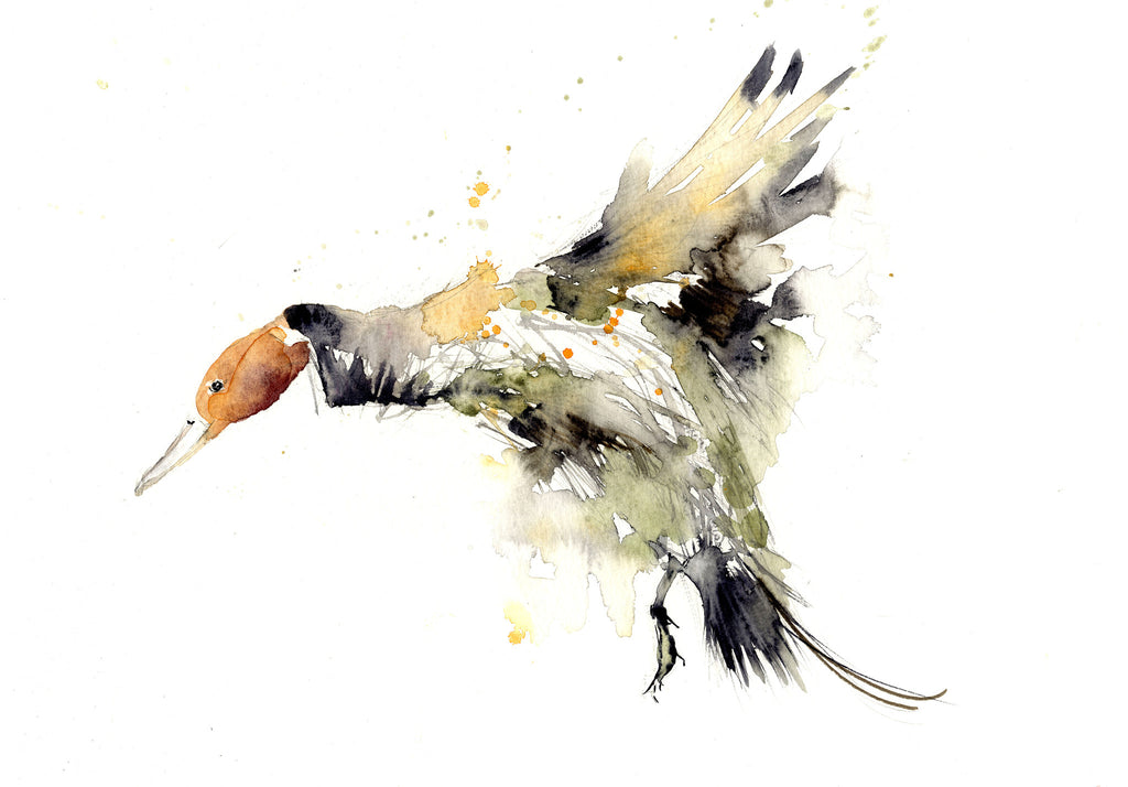 Pintail  duck - Jen Buckley Art limited edition animal art prints