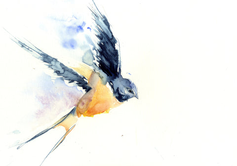 Swallow limited edition print