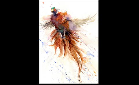 LIMITED EDITON   pheasant taking off watercolour print