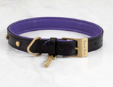 DOG COLLAR X-SMALL  + DOG LEAD