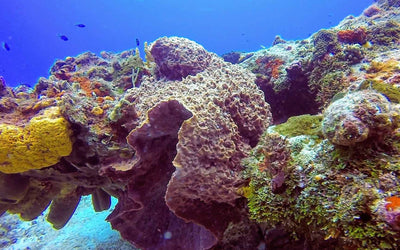 THE REEFS OF COZUMEL
